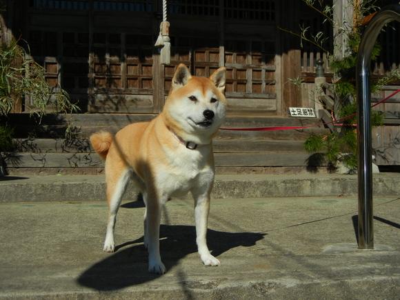 2011年1月2日(日)初詣に行ってきたよ~!_f0060461_142935100.jpg