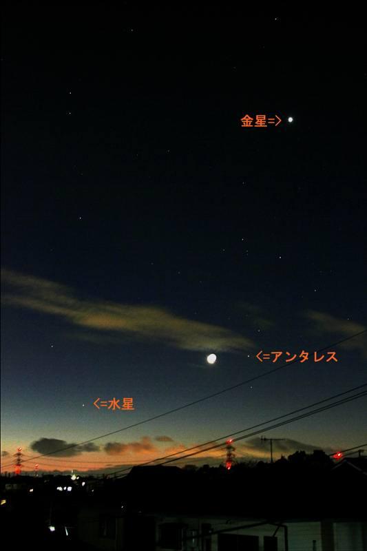 幸福の青い鳥・ルリビタキ/正月の東天_b0024798_953543.jpg
