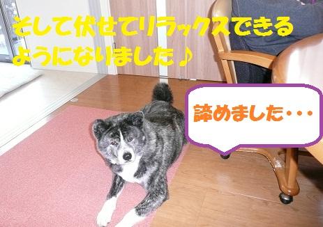 f0121712_1415386.jpg
