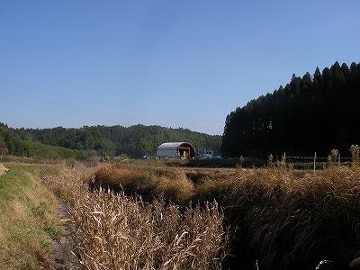 宮崎自然農園・12月19日。拡げた田んぼの草刈。_b0181417_11403436.jpg