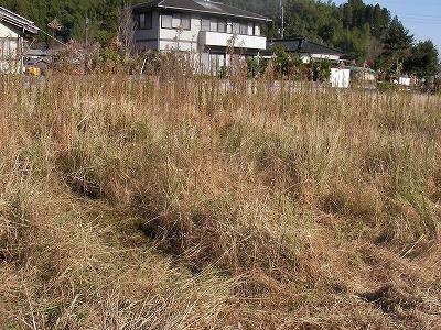 宮崎自然農園・12月19日。拡げた田んぼの草刈。_b0181417_11514290.jpg