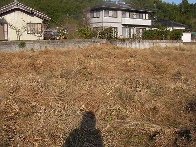 宮崎自然農園・12月19日。拡げた田んぼの草刈。_b0181417_11524137.jpg