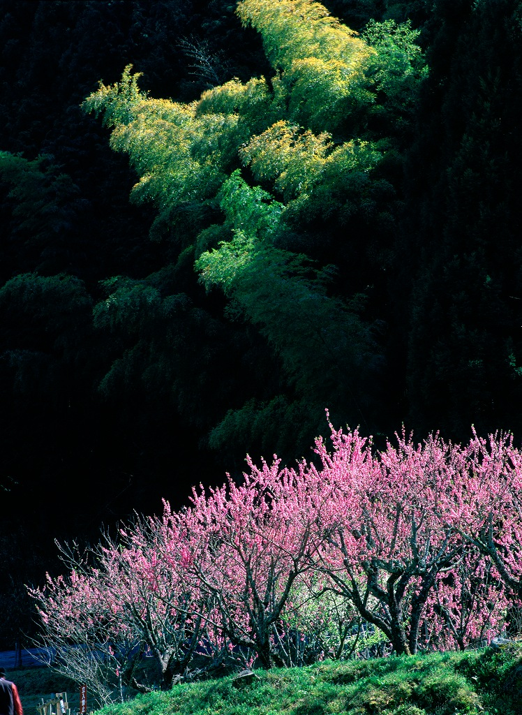 The Wilderness Gallery個展 木霊 日本の光_f0050534_1743847.jpg