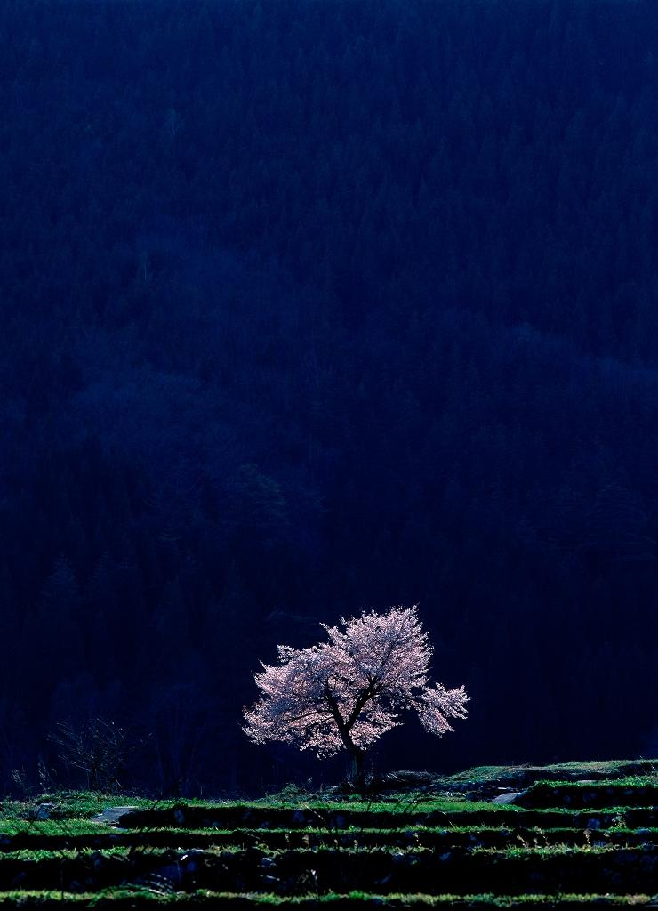 The Wilderness Gallery個展 木霊 日本の光_f0050534_175567.jpg