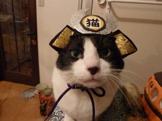 かぶと猫 空編。_a0143140_2391095.jpg