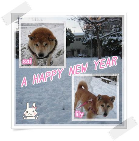 今年もよろしく!_c0049950_1913150.jpg