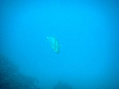沖縄にきたらダイビング!!_a0156273_1624073.jpg
