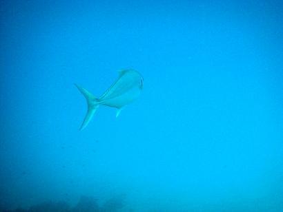 沖縄にきたらダイビング!!_a0156273_163337.jpg