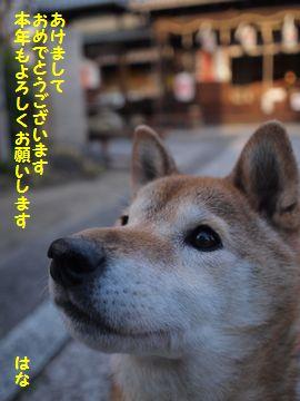 新年のご挨拶_e0012580_1495668.jpg