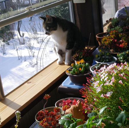 猫部屋&大ハウスなど_a0136293_12472434.jpg