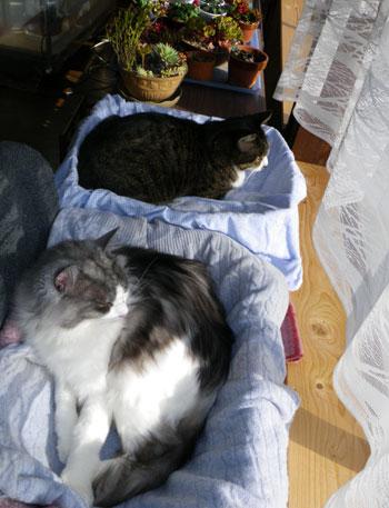 猫部屋&大ハウスなど_a0136293_1248438.jpg