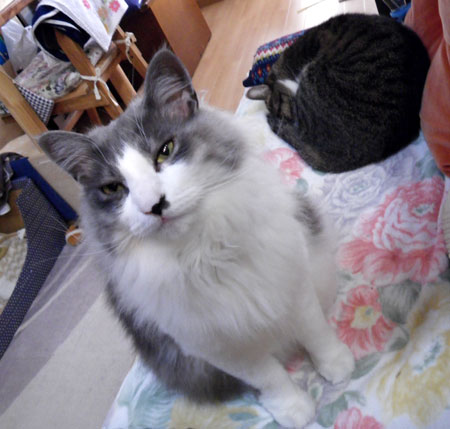 猫部屋&大ハウスなど_a0136293_12502491.jpg
