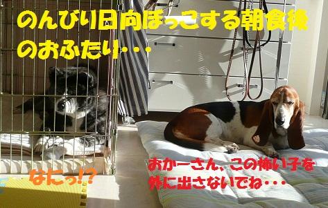 f0121712_14573238.jpg