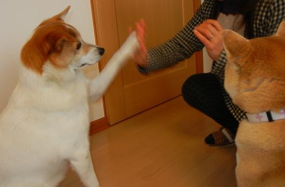 2011年1月4日(火)ルアー君は天才!?_f0060461_19432165.jpg