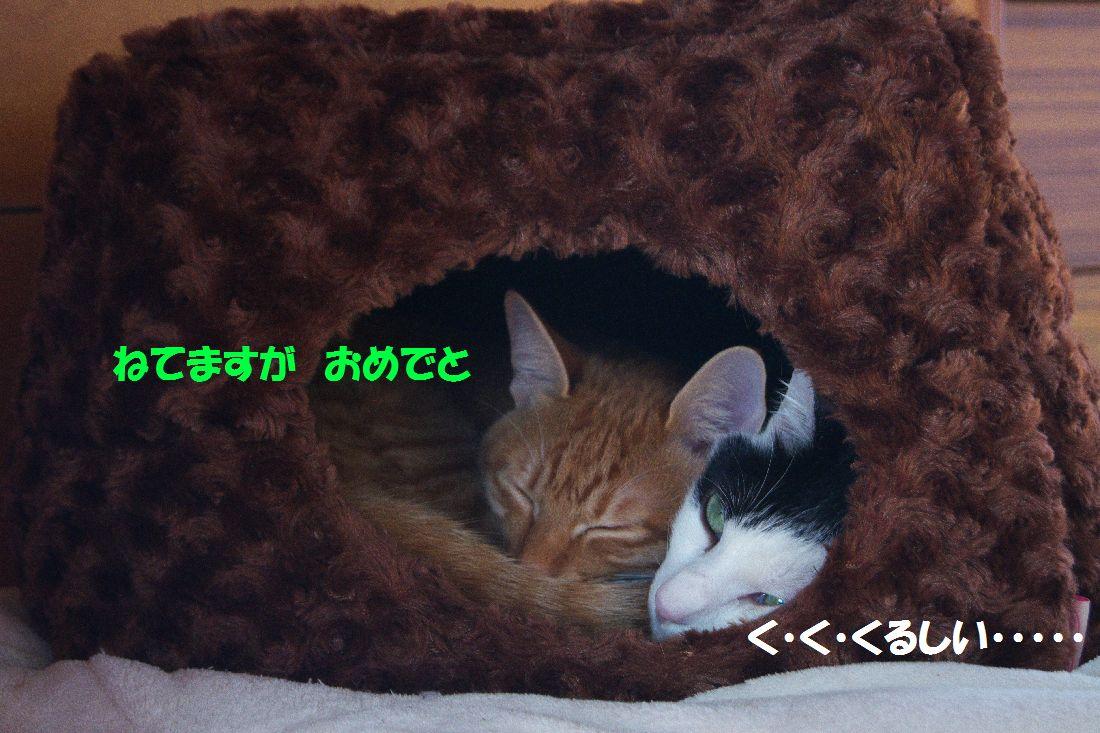 f0197682_0522275.jpg
