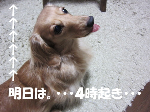 b0200291_1693069.jpg