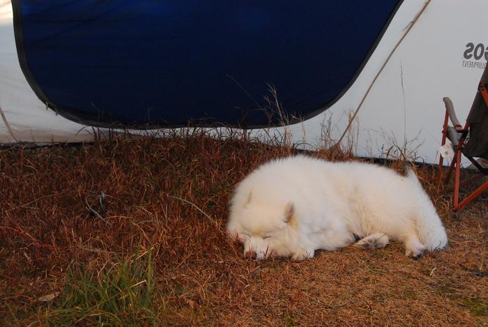 年末キャンプに行ってきました。_a0049296_1937198.jpg