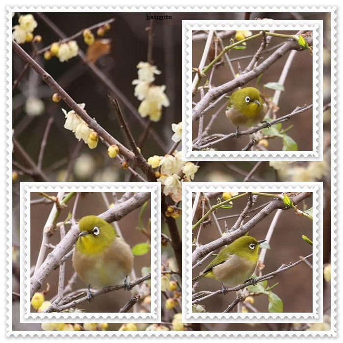 もう梅の花_a0057905_2362820.jpg