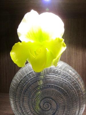 2011年新年明けましておめでとうございます_b0122805_16392534.jpg