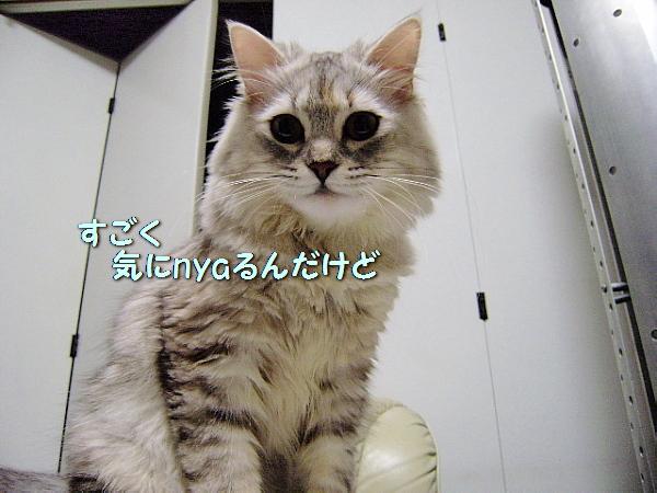 c0211109_5181051.jpg