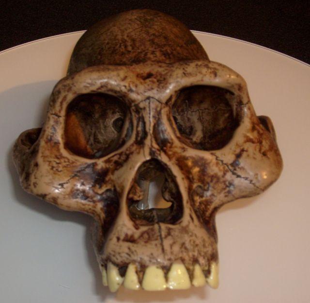 現生人類が進化する前に起こっていた新生児の巨大化_c0025115_19502895.jpg
