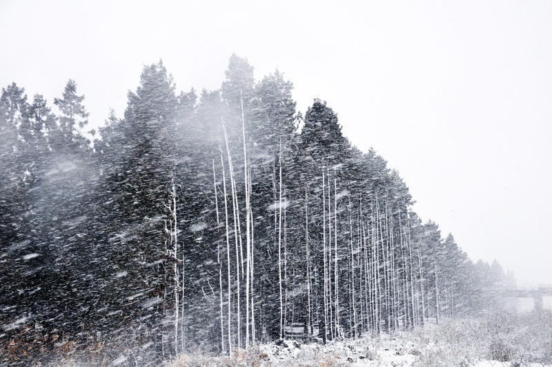吹雪 猛 猛吹雪が通勤時間帯を直撃、秋田市 各所で渋滞発生【動画】 秋田魁新報電子版