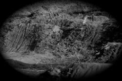 2011トレイル詣で  裏庭の風景_b0065730_17583638.jpg