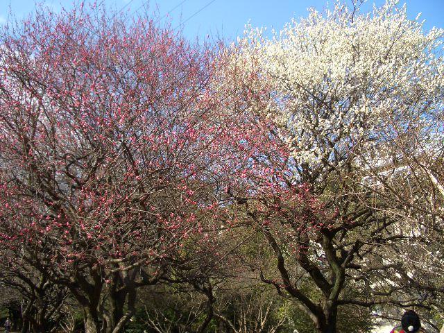 駒沢公園散歩_f0098338_22504363.jpg