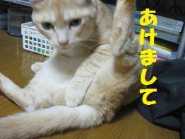 b0151748_1314359.jpg