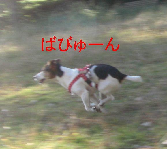 f0053952_131124.jpg
