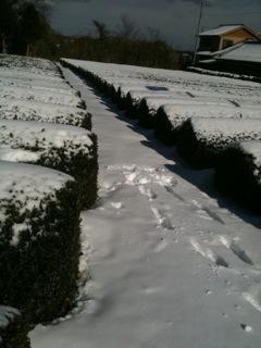 初雪!_d0118072_1353688.jpg