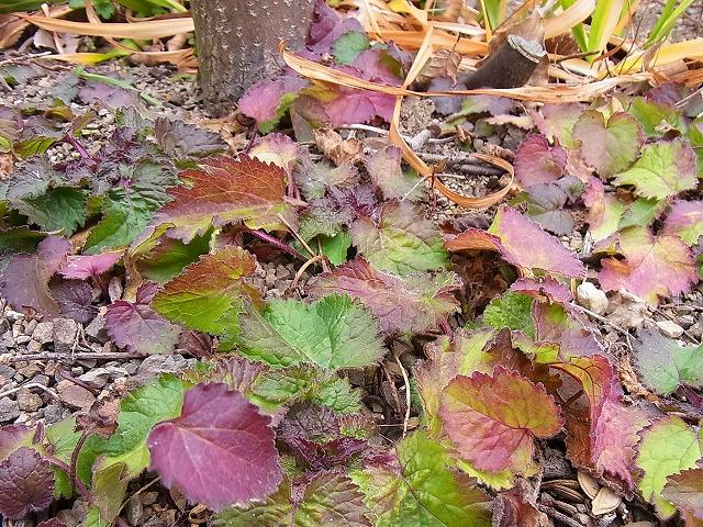葉色の美しさ_e0181373_210119.jpg