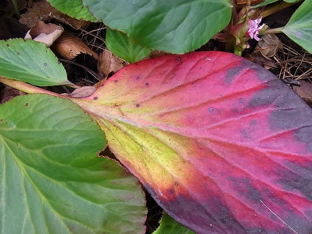 葉色の美しさ_e0181373_2161173.jpg