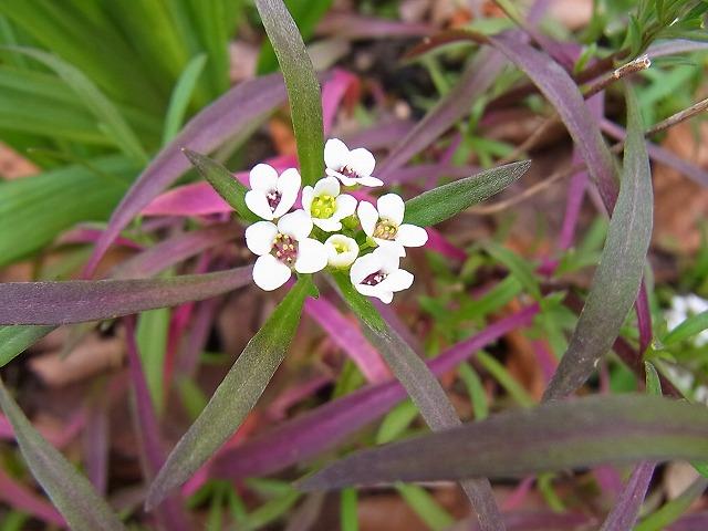 葉色の美しさ_e0181373_2162858.jpg