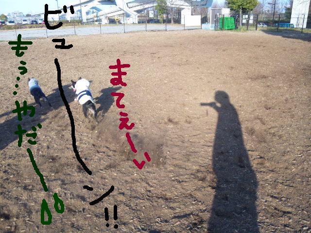 ちゃんちゃんこ…_d0187891_1739655.jpg