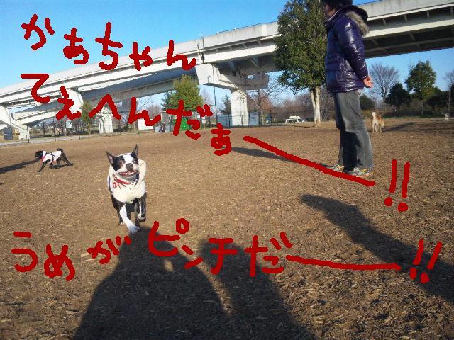 ちゃんちゃんこ…_d0187891_1750924.jpg