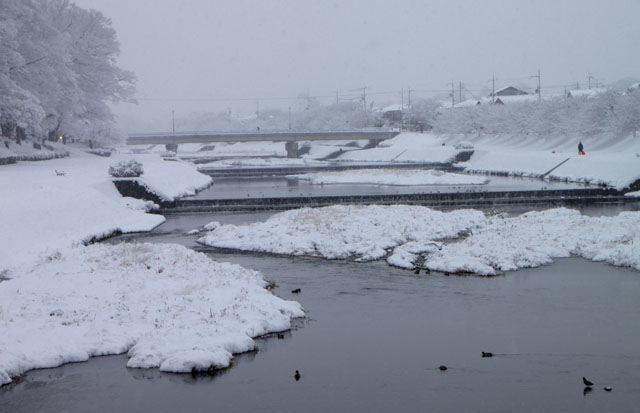 雪景色 鴨川_e0048413_168378.jpg