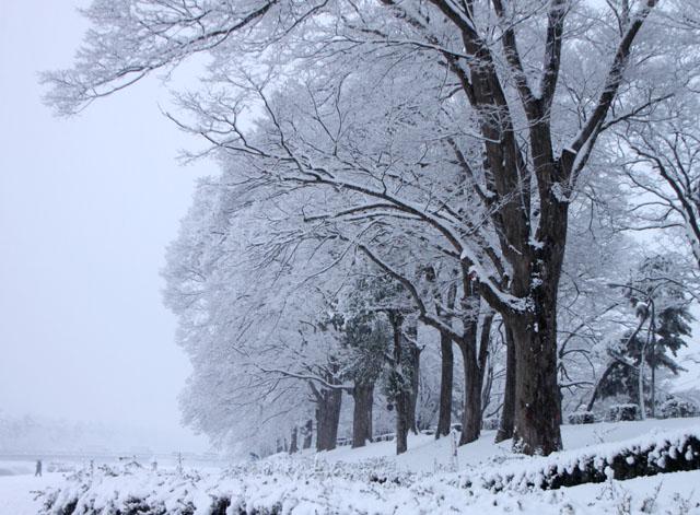 雪景色 鴨川_e0048413_1694348.jpg
