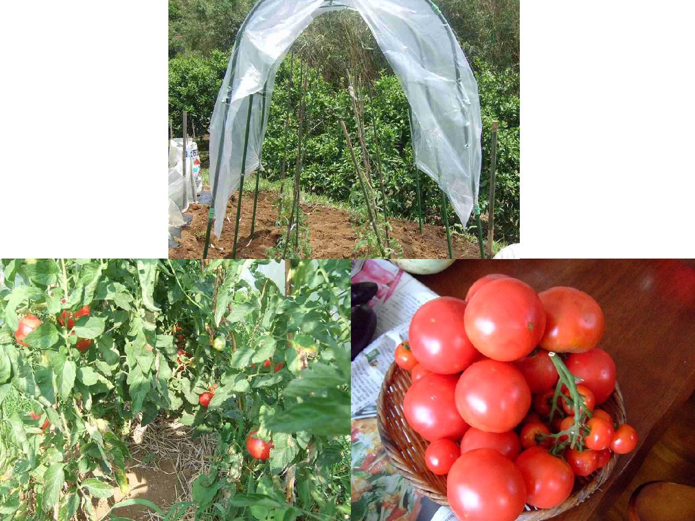 今年はこんな...野菜(果実)を作りたい!_b0137932_1272017.jpg