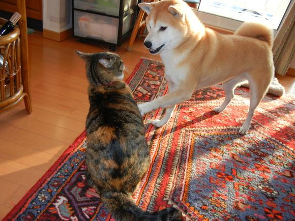 2011年1月6日(木)愛と心の初本格ガチンコ!_f0060461_1720552.jpg