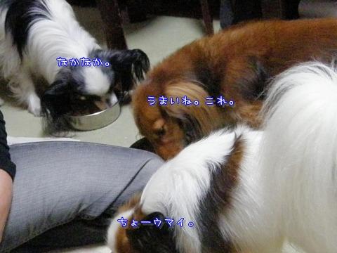 e0059267_2234725.jpg