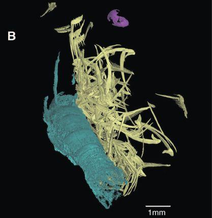 アンモナイト化石の3D解析で彼らの食性が明らかになった_c0025115_1844549.jpg