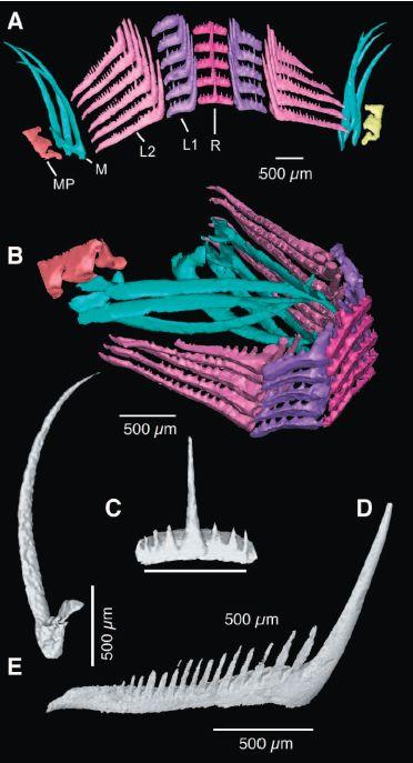アンモナイト化石の3D解析で彼らの食性が明らかになった_c0025115_18445770.jpg
