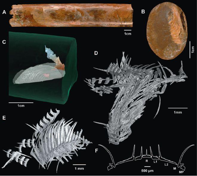 アンモナイト化石の3D解析で彼らの食性が明らかになった_c0025115_1844582.jpg