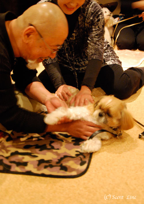 愛犬の為の整体教室予約について_c0099133_12325469.jpg