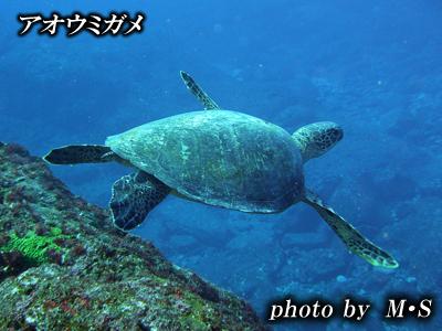Divehouse Kanaloa  八丈島 ダイビングログ_b0189640_21534544.jpg