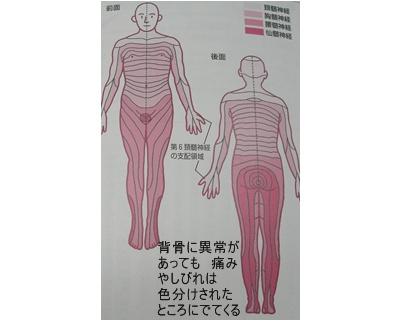 骨折と骨粗鬆症と椎間板ヘルニア_a0084343_1383584.jpg
