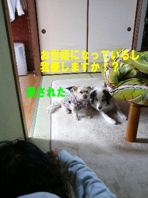 d0013645_22155042.jpg