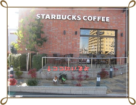 わんことひたちの牛久のスターバックスコーヒーに行きました。_a0091865_8421720.jpg