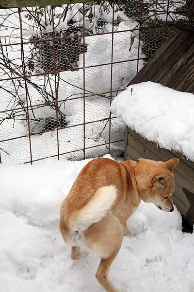 雪の中、鈴さん_b0123467_11301690.jpg